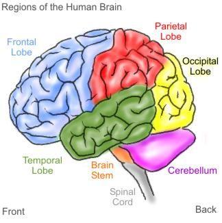 Waarom bewegen goed is voor onze hersenen.